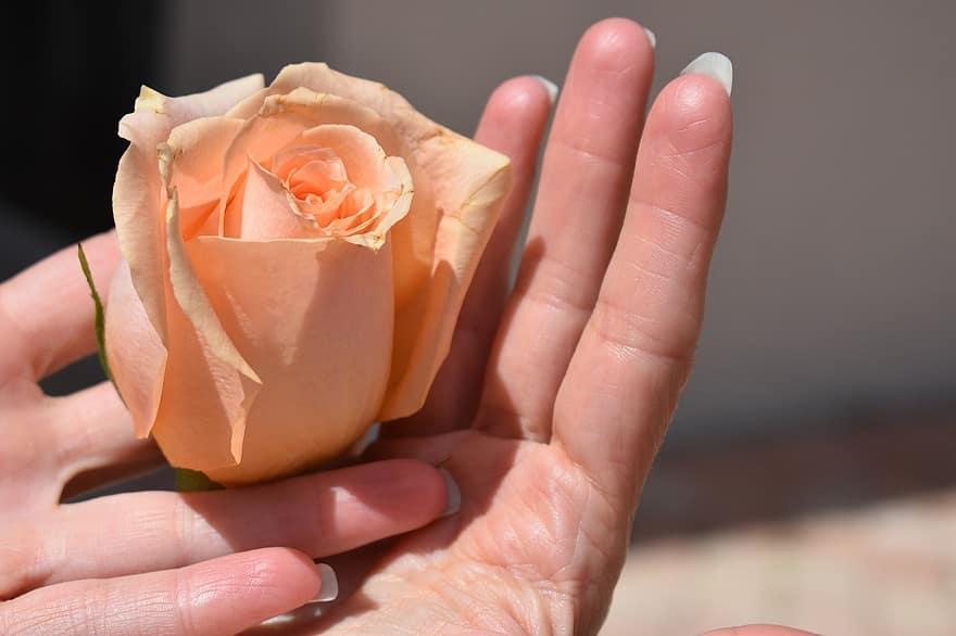 mano femenina ofreciendo una rosa de color naranja. Foto de www.pikist.com